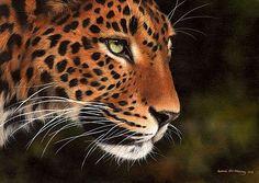 Sarah Stribbling Wildlife Art