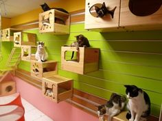 Custom Climbing Wall For Cats Kitties need a place to climb too!
