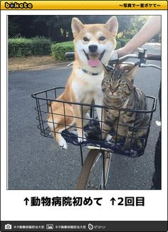 Happy dog and grumpy cat Cute Funny Animals, Funny Animal Pictures, Funny Cute, Funny Dogs, Cute Cats, Funniest Pictures, Hilarious, Tier Fotos, Cool Pets
