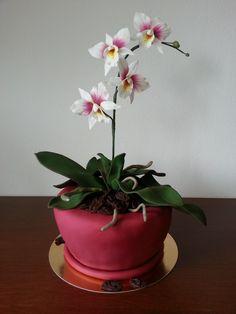 - Orchid Wedding Cake, Orchid Cake, Wedding Cakes, Flower Pot Cake, Flower Pots, Flower Cakes, Icing Flowers, Sugar Flowers, Yarn Cake
