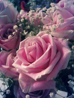 على ورق الورد