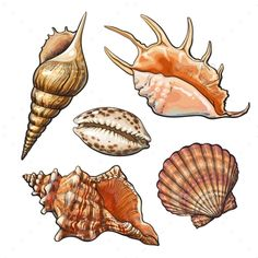 Set of Various Mollusk Sea Shells by Sabelskaya Set of various beautiful mollusk sea shells, sketch style illustration isolated on white background. Realistic hand drawing of sea Watercolor Ocean, Watercolor Drawing, Tattoo Conchas, Realistic Drawings, Art Drawings, Sea Creatures Drawing, Shell Tattoos, Natur Tattoos, Seashell Art