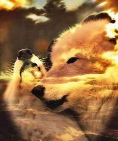 2b59e486be111 il Prezzo Della Passione katya - Community - Google+ Native American Wolf