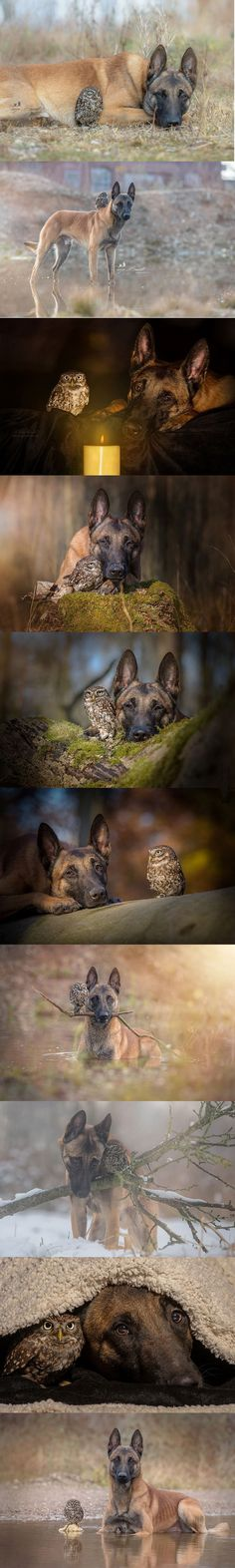 A Mal and his owl...