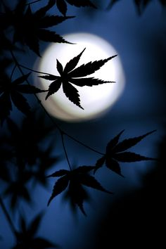 """Blue Moon behind weed. ..""""Our world does not want to be saved, it wants to be loved."""" """"It is the same with our children."""""""