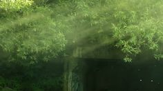 Smoke in the green leaves on the river under the concrete tunnel. Video Clip, Green Leaves, Stock Video, Stock Footage, Concrete, Northern Lights, Smoke, River, Wallpaper