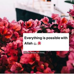 I testify that this is so true! Allah took me out of a 'hopeless' place and given me the beauty of Islam.