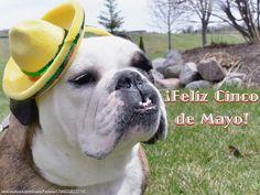 05May14 - Fenway - Cinco de Mayo