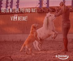 Horse Quotes, Love Of My Life, Fur Babies, Equestrian, Horses, Blog, Animals, Heart, Horse Riding Quotes