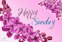 Happy Sunday – Good Morning Friends – Greetings Sunday Wishes, Happy Sunday Friends, Good Morning Friends, Sunday Morning, Weekend Quotes, Sunday Quotes, Sunday Images, Good Morning Images, Sunday Motivation
