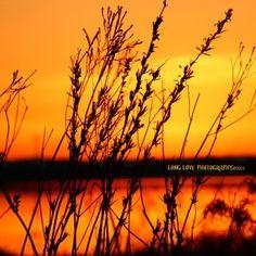 """Sunset in Sutter"""