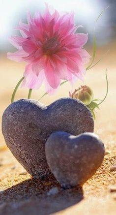 Heart Wallpaper, Nature Wallpaper, Wallpaper Backgrounds, Love Heart Images, I Love Heart, Heart In Nature, Heart Art, Image Zen, Love Symbols