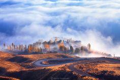 Paradise by Saeed Barikani