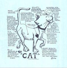 Manual #cat