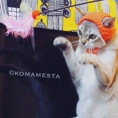 @komamesta