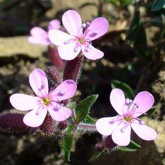 Giocanatura - Distinguere le principali famiglie di piante con il fiore A-J