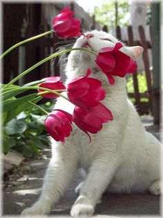 """cats and roses"""