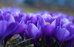 """""""An illumination; a match burning in a crocus; an inner meaning almost expressed."""""""