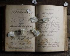 flower and book art hydrangea petals farmhouse by dullbluelight