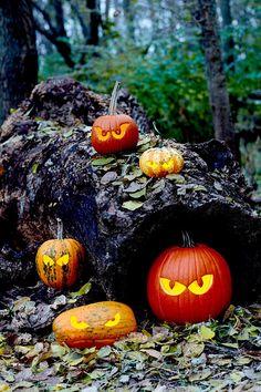 pumpkins-carved-eyes-stump-0411ca10 Pumpkin Face Carving, Pumpkin Carving Stencils Free, Pumpkin Carvings, Owl Pumpkin, Pumpkin Ideas, Pumpkin Lights, Carving Designs, Pumpkin Decorating, Autumn Decorating