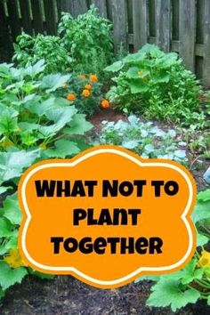 What not to plant together.
