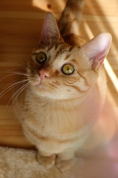 Orange kitty perfection!