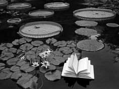 Kati Horna - Lecciones de Botanica, Suiza (Lessons of Botany)