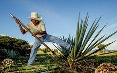 Mezcal-Oaxaca.jpg (1680×1050)