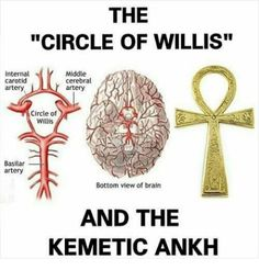 Circle of Willis & Kemetic Ankh - - Circle of Willis & Kemetic Ankh Spiritualität Alchemy Symbols, Ancient Symbols, Ancient Aliens, Ancient Egypt, Ancient History, Mayan Symbols, Viking Symbols, Egyptian Symbols, Viking Runes