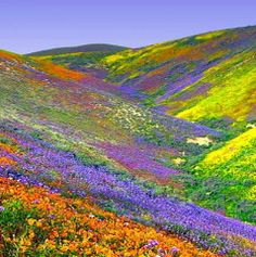 Valley of Flowers National Park is an Indian national park, located at a height in West Himalaya. It is renowned for its meadows of endemic alpine flowers and the variety of flora found there. It is located in Uttarakhand state