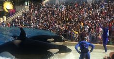 PETA: Petition: Helping surviving animals in danger of death at Marineland