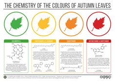 Why do leaves change colour? via @annalsofbotany
