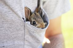 Cute little bunny in a pocket. | Photographer?
