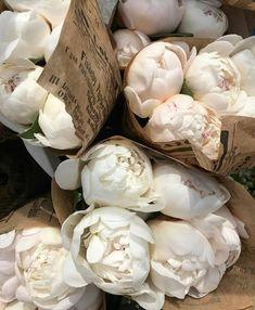 Spaece - Growing Peonies - How to Plant & Care for Peony Flowers Beige Aesthetic, Flower Aesthetic, Design Blog, My Flower, Beautiful Flowers, Cactus Flower, Exotic Flowers, Fresh Flowers, No Rain