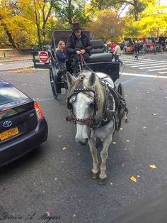 So this guy decided to make a sharp right turn directly in front of our bus. Only in New York. New York City, Haha, Horses, Guys, Animals, Animales, New York, Animaux, Ha Ha