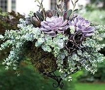 succulent hanging basket on VisualizeUs