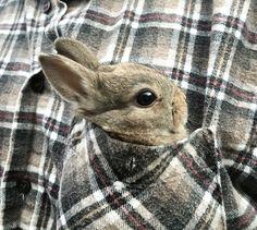 bun in the pocket