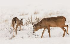 The Seven Best Days of the Rut | Field & Stream