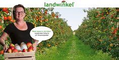 Ook landwinkels in Brabant, direct je eten kopen bij de boer.