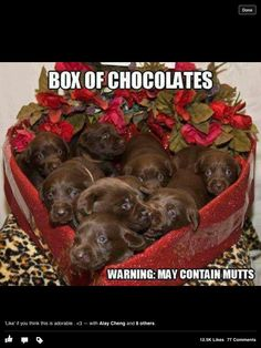 57 Best Pets And Valentines Day Images Doggies Cute