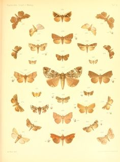 Abt. 2 - Lepidopteren von Madagascar. - Biodiversity Heritage Library