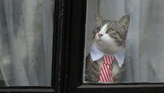 James, il gatto di julian Assange, ha conquistato l'attenzione di tutti i cronisti (e non) che seguono il caso del giornalista di Wikileaks