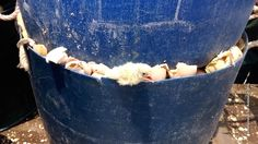 This is the egg industry. Male baby chicks being crushed to death in barrel.
