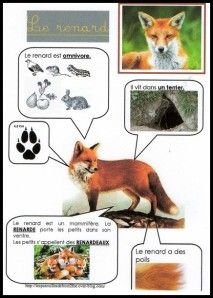 Printable page about le renard Animal Activities For Kids, Educational Activities, Animals For Kids, Science For Kids, Science And Nature, Preschool Curriculum, Kindergarten, French Education, Animal Habitats