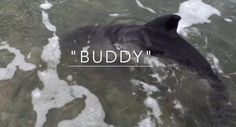 Dog Finds Baby Dolphin And Saves His Life