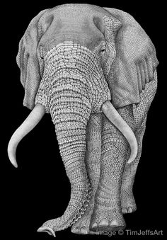 My Elephant ink drawing is finished and prints are now available in my Etsy Shop at: https://www.etsy.com/listing/234863975/elephant-3-ink-drawing