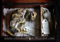 Blog dedicado a cosas raras ... raras como un dodo albino. Escultura , propmaking ,OOAK , links a otros dodos albinos , frikadas y demás desvaríos bizarros. Blog for strange things ... strange as an albino dodo. Sculpture , propmaking , links and bizarre material...