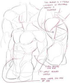 Drawing body male tutorials anatomy reference Ideas Best Picture For Illustrations boy For Yo. Anatomy Sketches, Anatomy Art, Anatomy Drawing, Art Sketches, Art Drawings, Hand Anatomy, Body Reference Drawing, Art Reference Poses, Anatomy Reference