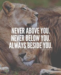 👇🏼Tag someone 🙌🏼➖➖➖➖➖➖➖➖➖➖➖➖➖➖➖ Lioness Quotes, Wolf Quotes, Wisdom Quotes, True Quotes, Great Quotes, Motivational Quotes, Inspirational Quotes, Qoutes, Lion Couple
