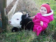11 Reasons Fluffy Cows Are The New Micropigs